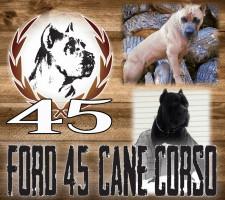 Ford Cane Corso Ohio